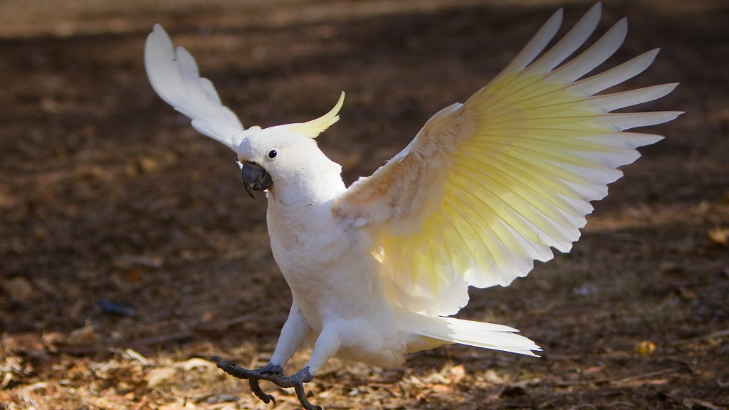 animals_hero_cockatoo.jpg