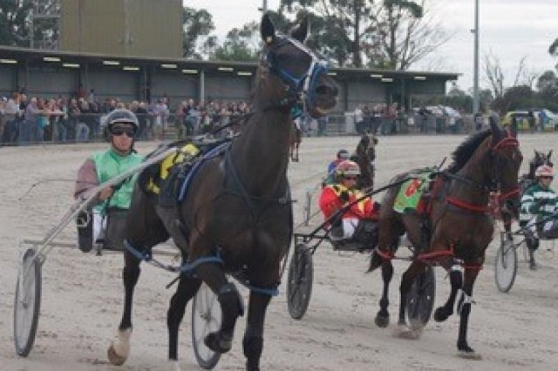 Up close at Terang harness racing.