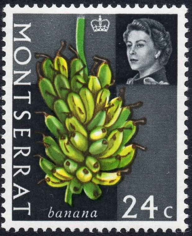Montserrat 1965 QEII definitive stamp: 24c Bananas